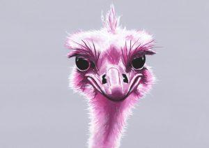 Magenta Ostrich